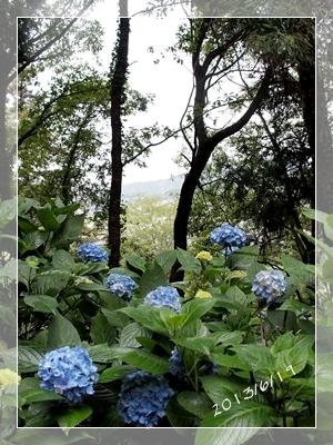 紫陽花には雨がよく似合ふ_c0026824_9384820.jpg