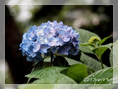 紫陽花には雨がよく似合ふ_c0026824_939073.jpg