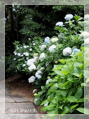 紫陽花には雨がよく似合ふ_c0026824_9392257.jpg