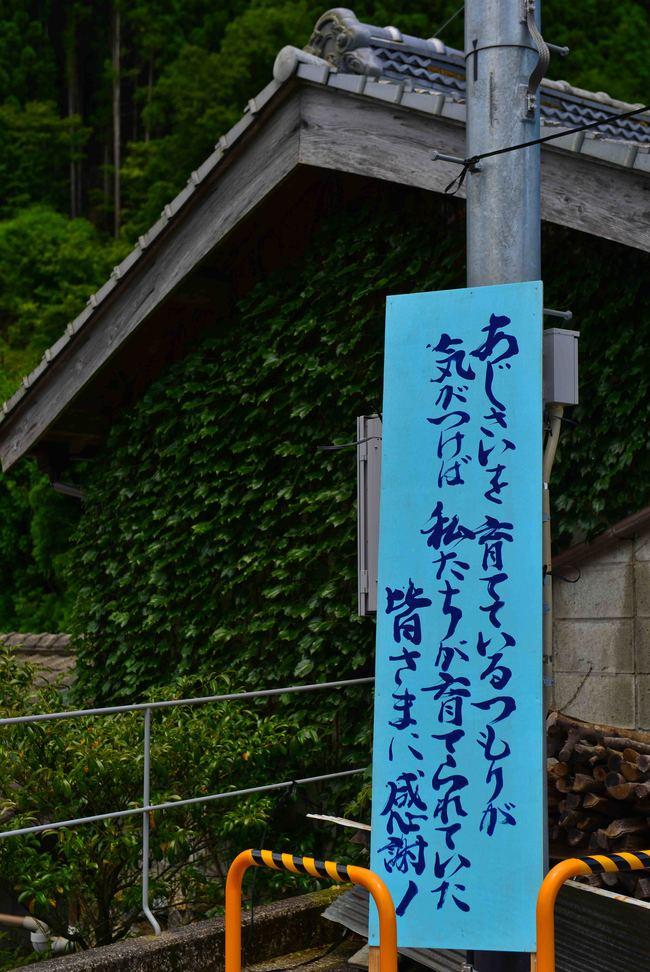 日ノ浦あじさい街道をのぼる_d0246136_2234261.jpg