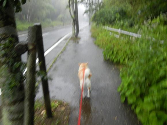 '13,6,20(木)今日も雨~♪_f0060461_16333218.jpg