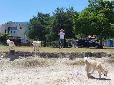 カナイくんを探せ!〜白犬クイズ〜 <答え>_a0119263_1753130.jpg