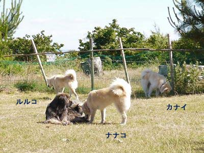 カナイくんを探せ!〜白犬クイズ〜 <答え>_a0119263_176163.jpg