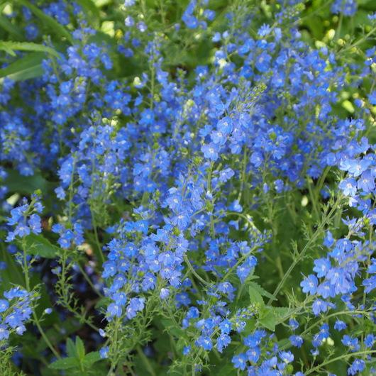 お庭の様子_a0292194_20472074.jpg