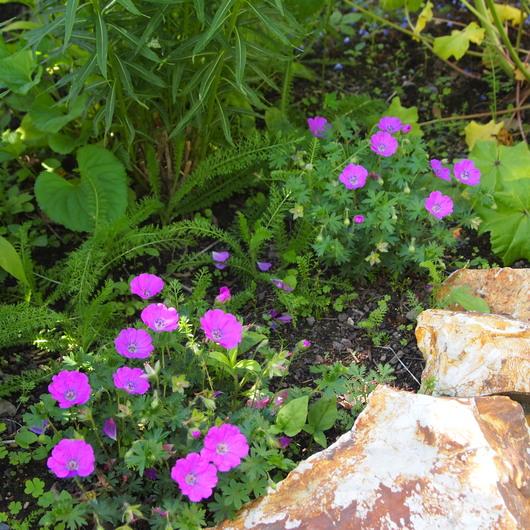 お庭の様子_a0292194_213919.jpg