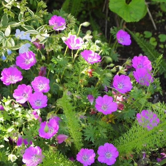 お庭の様子_a0292194_2142765.jpg