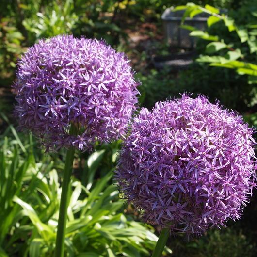 お庭の様子_a0292194_2152837.jpg