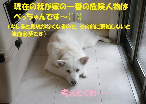 f0121712_747194.jpg