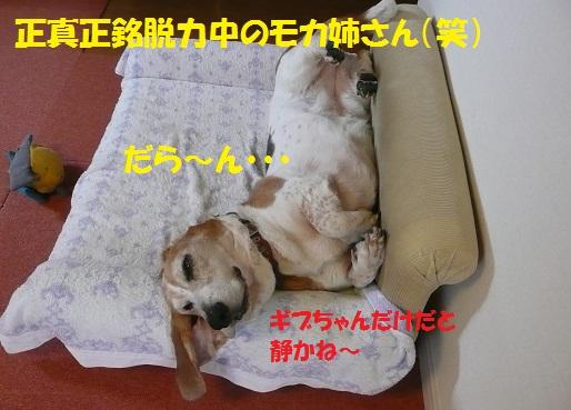 f0121712_7475325.jpg
