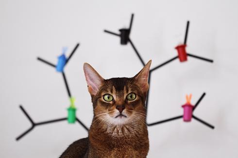 [猫的]千手観音_e0090124_093827.jpg