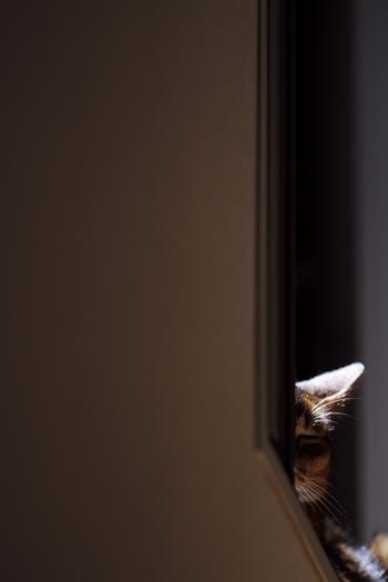 [猫的]Untitled series_e0090124_23342451.jpg