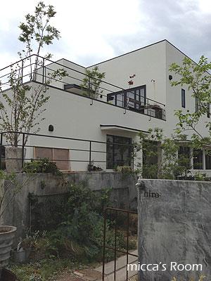 浜松 hiroでお茶と家具とグリーンを堪能_b0245038_20243611.jpg