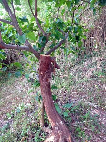 KAWABE博士から届いたクマバチ体験談_d0130640_18182039.jpg