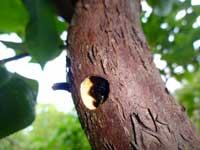 KAWABE博士から届いたクマバチ体験談_d0130640_18381169.jpg