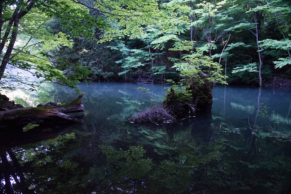 鶏頭場の池深緑_e0271864_20282061.jpg