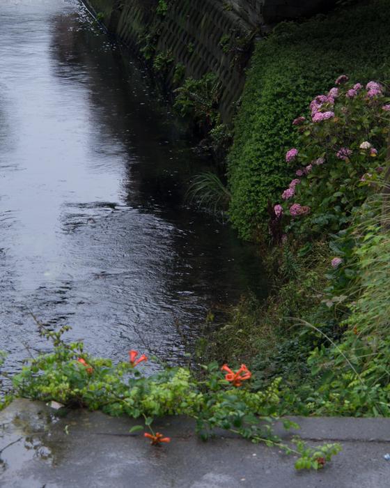 雨の行合川。_b0022268_20472655.jpg