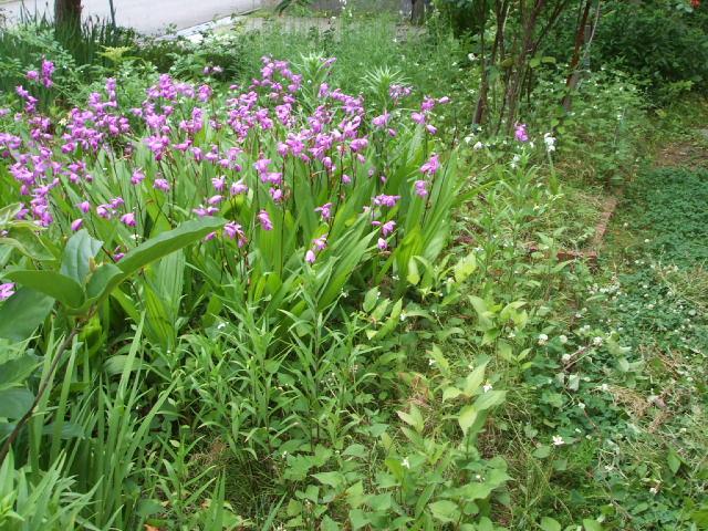 雑草の庭(ー_ー)!!_f0019498_10463996.jpg
