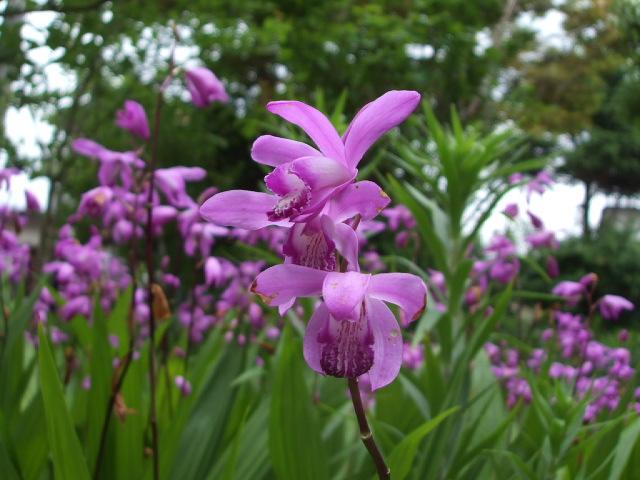 雑草の庭(ー_ー)!!_f0019498_10464747.jpg
