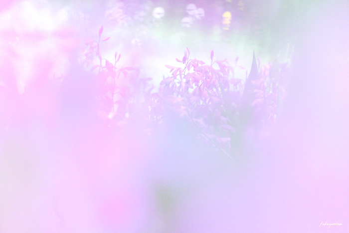 f0185802_10363125.jpg