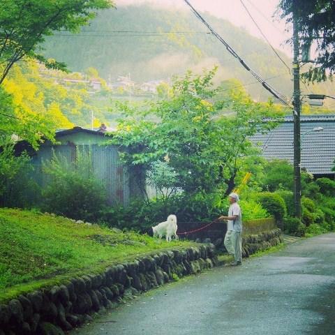 梅雨の晴れ間の散歩道_b0090517_14293495.jpg