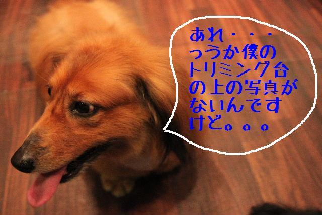 b0130018_23224196.jpg
