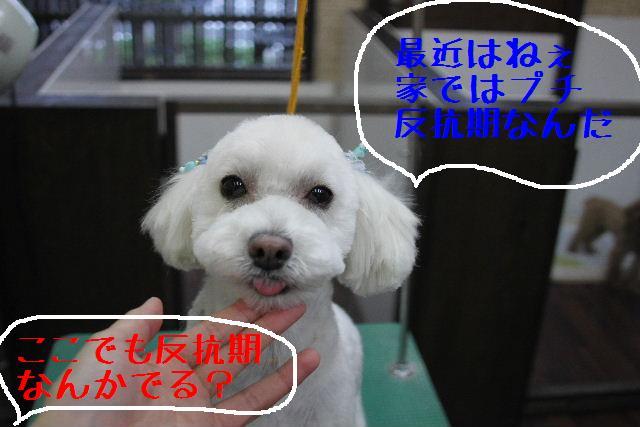 b0130018_23293299.jpg