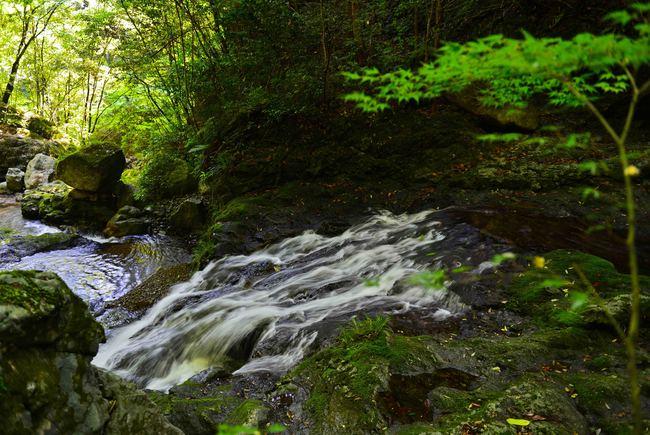 大樽の滝  撮影終えて下山_d0246136_15482623.jpg