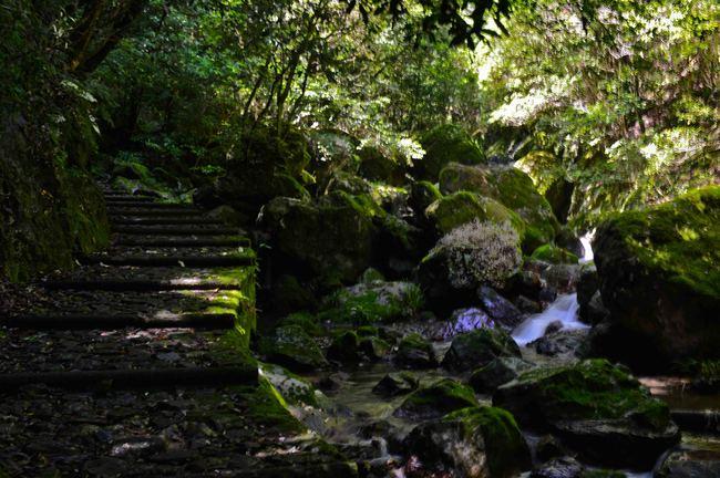 大樽の滝  撮影終えて下山_d0246136_154866.jpg