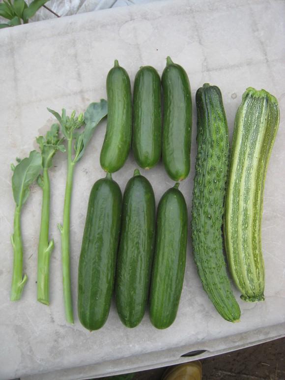 収穫物色々_e0121558_23472021.jpg