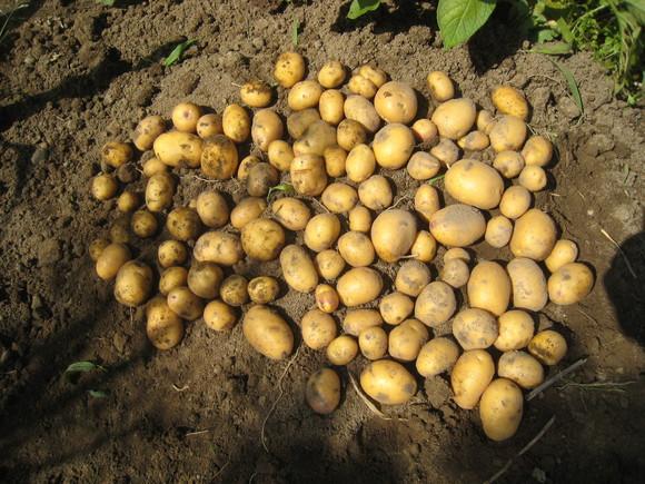 収穫物色々_e0121558_23482482.jpg