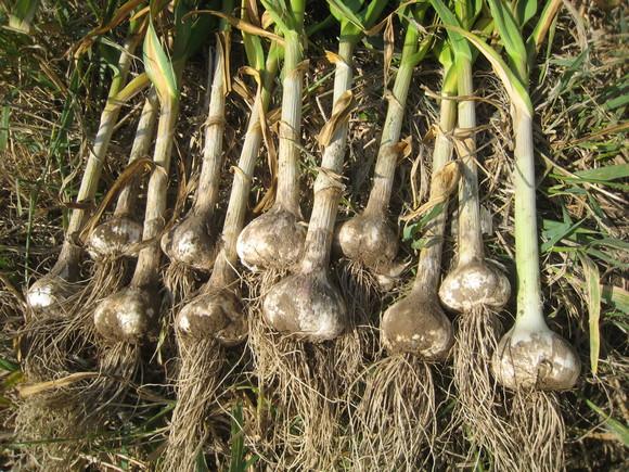 収穫物色々_e0121558_23483574.jpg