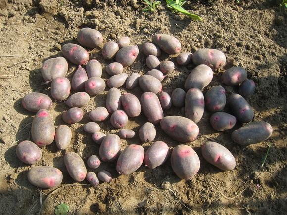 収穫物色々_e0121558_23484041.jpg