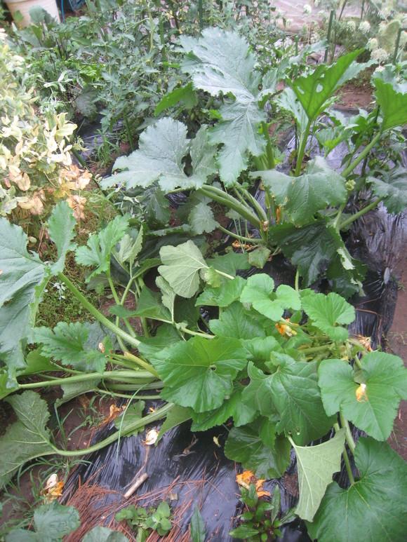 収穫物色々_e0121558_23503998.jpg