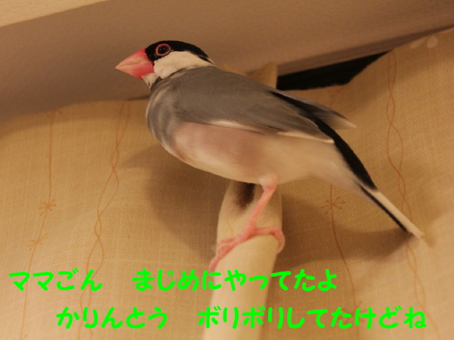 b0158061_0455150.jpg