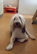 週末の犬・・_f0072767_19131842.jpg