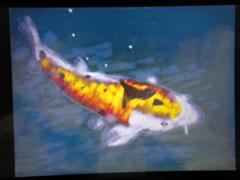 3DSと鯉と昼寝_d0132289_13482453.jpg