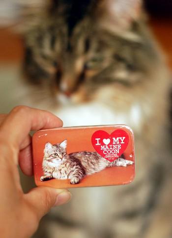猫好きのためのミント缶_b0253205_301321.jpg