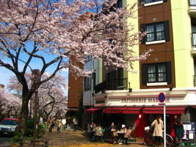 桜_a0036808_1556155.jpg