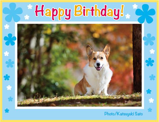 ムサシくん、お誕生日おめでとう♪_d0102523_132972.jpg