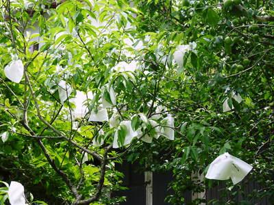 株式会社旬援隊の6月の敷地の様子と四つ葉のクローバーへの思い_a0254656_18271386.jpg
