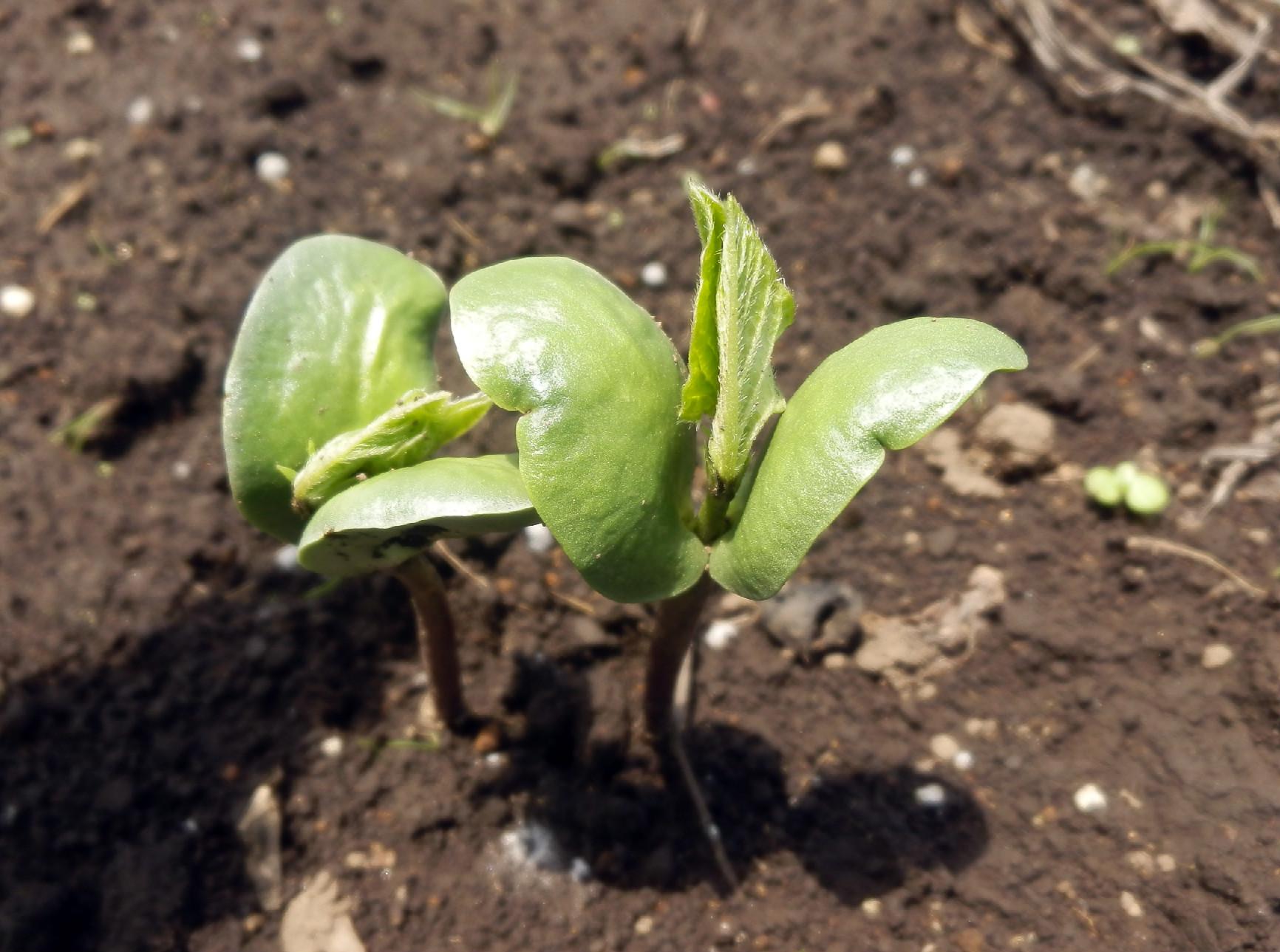 ズッキーニの初収穫です_c0053863_239055.jpg
