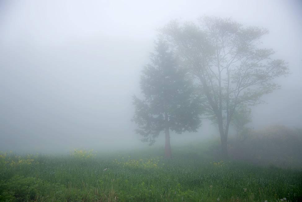 霧の中のシルエット_e0271864_15421237.jpg
