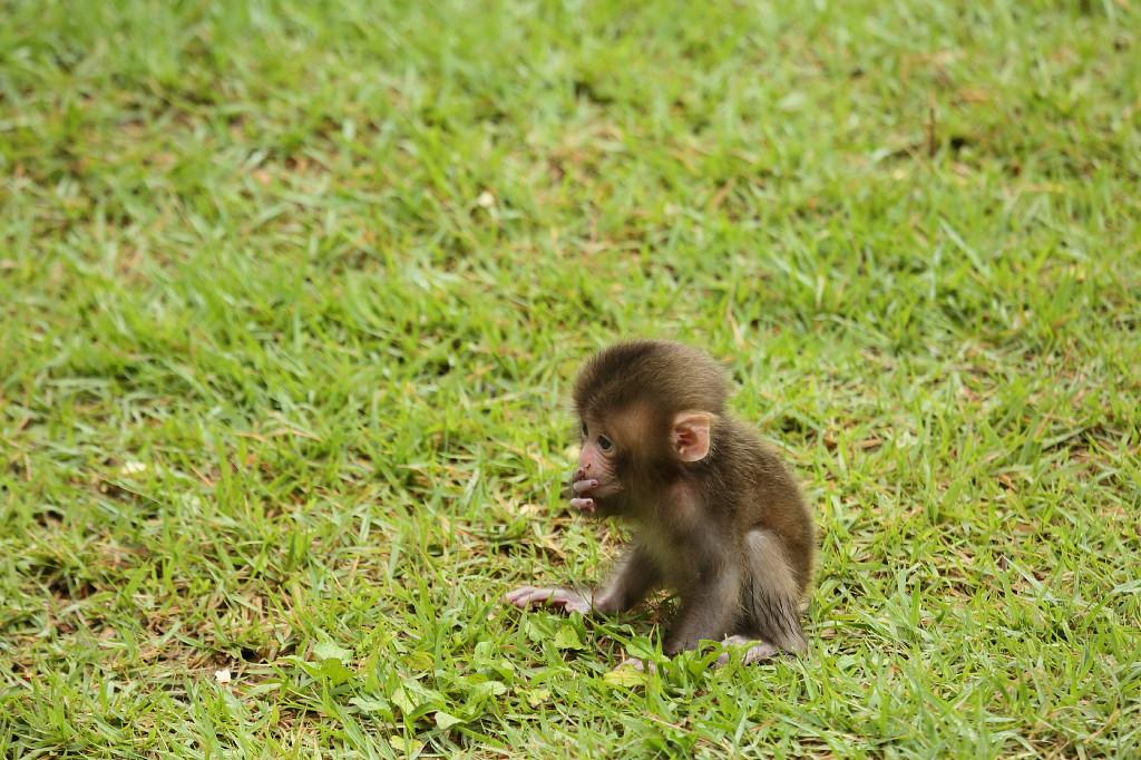 草原で遊ぶ猿