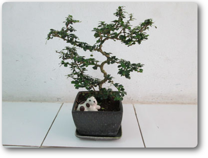 6月23日 BONSAI_d0086871_16521427.png