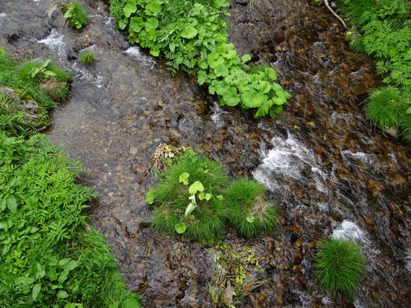 小坂の七滝と側を流れる川、少しの茅葺き民家など_a0136293_14513743.jpg