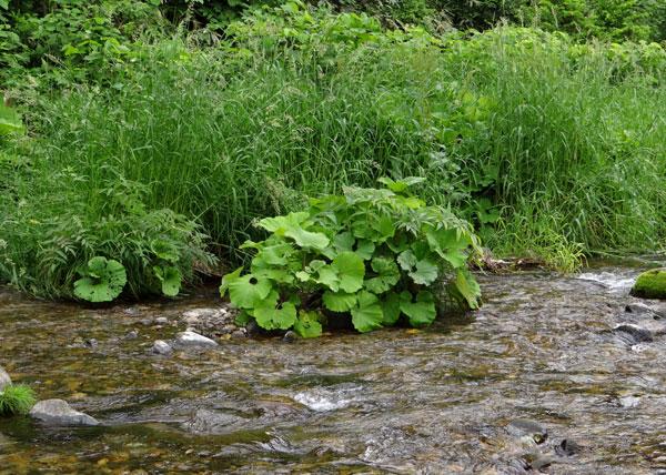 小坂の七滝と側を流れる川、少しの茅葺き民家など_a0136293_14534050.jpg