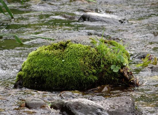 小坂の七滝と側を流れる川、少しの茅葺き民家など_a0136293_14543491.jpg