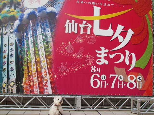 今年のはな(87)の日は仙台七夕を見に行きました♪_f0039907_15443553.jpg