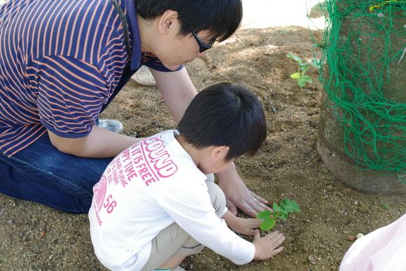 「親子で緑のカーテンをつくろう」開催しました_e0235911_9343118.jpg