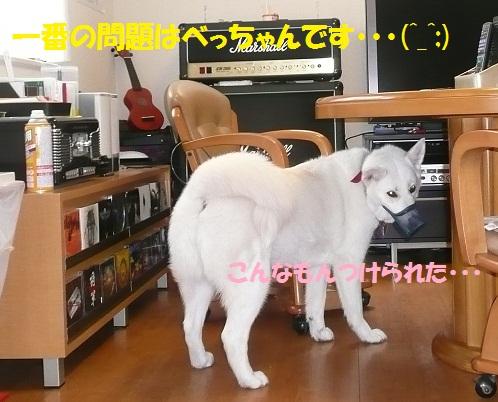 f0121712_16352770.jpg